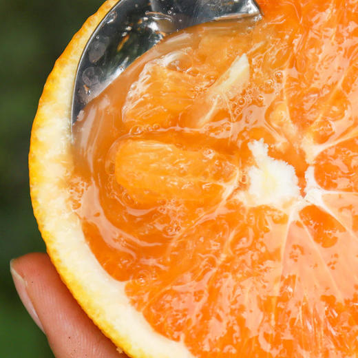 九月红秋橙 果重9斤【三峡特产】秭归秋橙九月红!橙香满溢!汁多甘甜!口感鲜嫩!绿色有机 商品图3