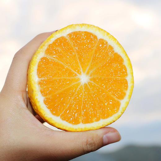 水润多汁的闽北甜桔柚 果嫩饱满 肉紧清甜 柚香浓郁 产地现摘新鲜直达 5斤装 商品图4
