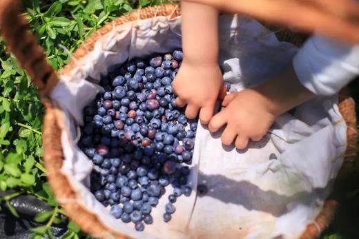199元抢总价值1400元的2021嘉兴版水果护照!无限量畅吃+免费带走22斤水果+精品农场活动 带上孩子一起亲近大自然 商品图7