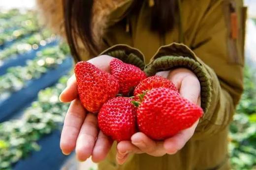 199元抢总价值1400元的2021嘉兴版水果护照!无限量畅吃+免费带走22斤水果+精品农场活动 带上孩子一起亲近大自然 商品图8