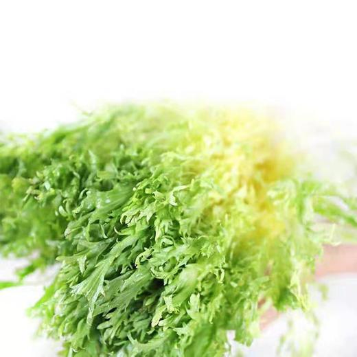 云南黄心苦叶生菜蔬菜 清脆可口 云南产地新鲜采摘 500g/1000g 商品图2