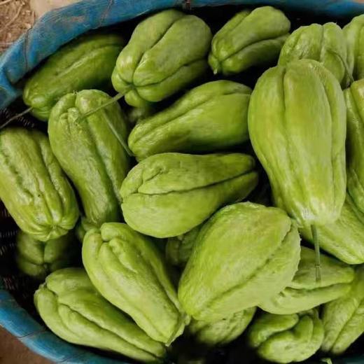 5斤装云南佛手瓜 青皮白肉 云南农家自种绿色蔬菜 商品图3