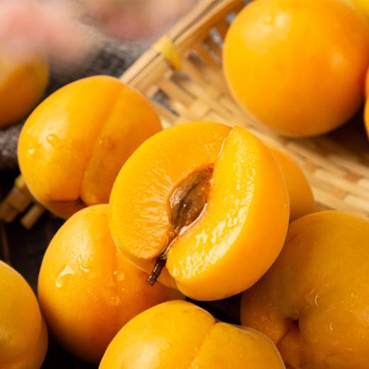 陕西新鲜黄杏 个大饱满 酸爽多汁 当季水果 2斤/4斤现摘现发 商品图3