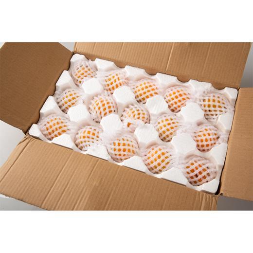 陕西新鲜黄杏 个大饱满 酸爽多汁 当季水果 2斤/4斤现摘现发 商品图4
