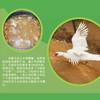 2盒*阳新屯鸟汤(新老包装随机发货) 商品缩略图1