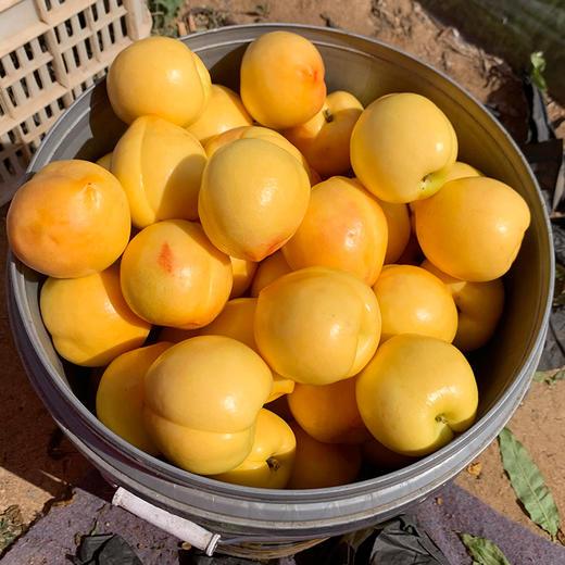 蒙阴应季头茬黄金油桃 甜蜜多汁 香酥味美 3斤装/5斤装 商品图4
