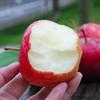 山西 • 红富士苹果 个大皮薄 脆甜爽口 每日营养空投佳品 9斤包邮 商品缩略图1