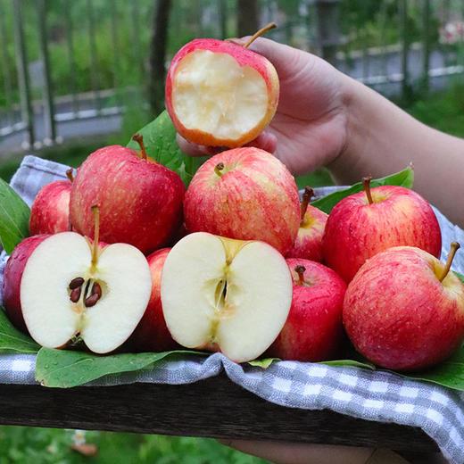 山西 • 红富士苹果 个大皮薄 脆甜爽口 每日营养空投佳品 9斤包邮 商品图0