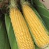 【助农战役】广西水果玉米 鲜嫩多汁 可以生吃的水果玉米  清甜可口 农家种植 商品缩略图0