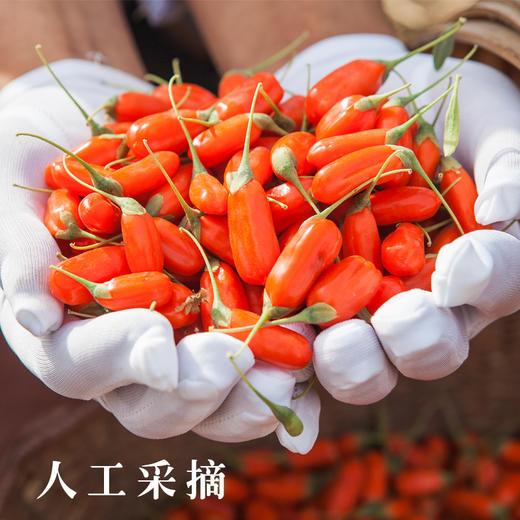 农道好物优品丨鲜果枸杞 原产地皮薄多汁 传统人工种植 新鲜水果 2020鲜枸杞水果 商品图0