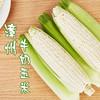 [牛奶玉米]一口爆汁 清甜爽口 3.8斤装(约6-8根) 商品缩略图0