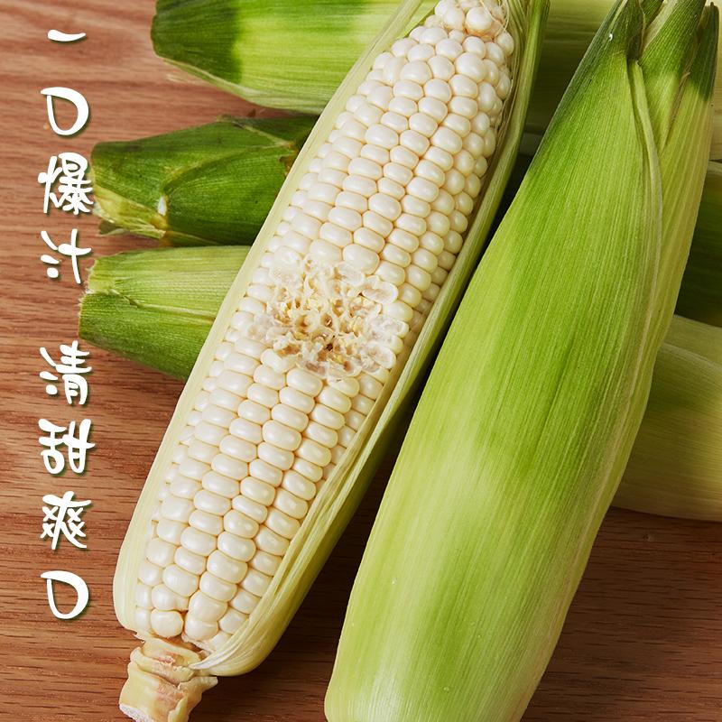 [牛奶玉米]一口爆汁 清甜爽口 3.8斤装(约6-8根) 商品图1