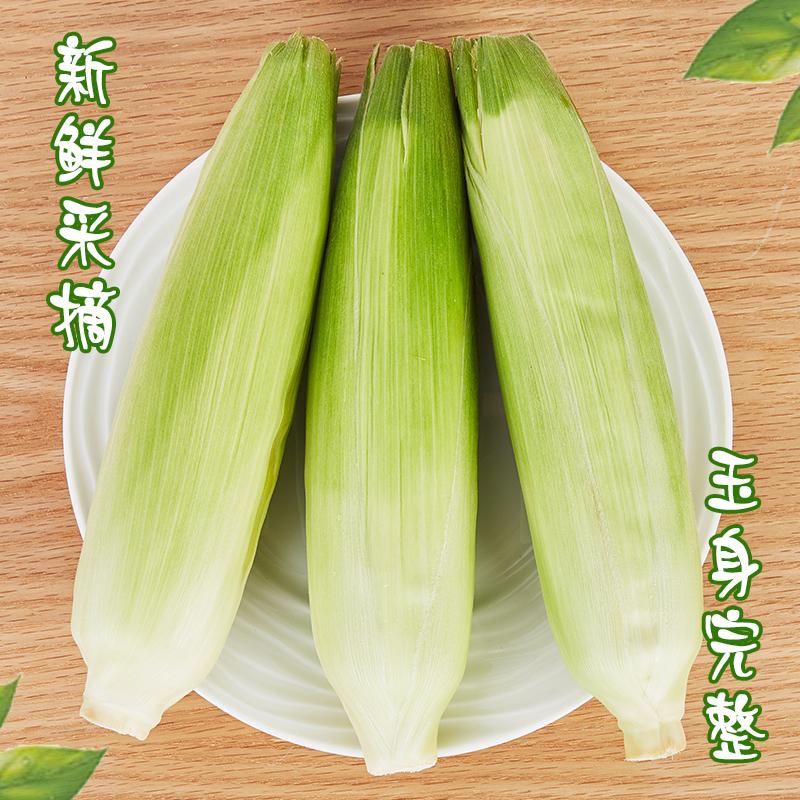 [牛奶玉米]一口爆汁 清甜爽口 3.8斤装(约6-8根) 商品图3