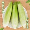 [牛奶玉米]一口爆汁 清甜爽口 3.8斤装(约6-8根) 商品缩略图3