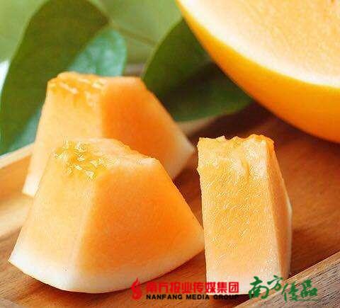 【珠三角包邮】甘肃民勤金红宝蜜瓜  2.5-3.5斤/个  2个/份(7月10日到货) 商品图1