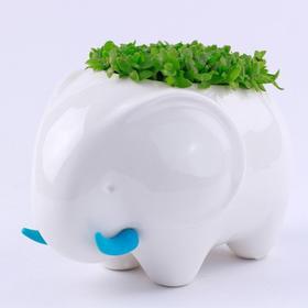 【生态E园】防辐射创意小动物 DIY办公室桌面绿植 创艺生活植栽
