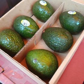 牛油果  单果110-150g  鳄梨5颗装  细化绵软香醇不腻    齐峰果业出品