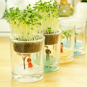 【为思礼 生态E园】四季杯 微缩盆栽 微景观生态瓶 DIY办公室桌面绿植 新奇特植栽