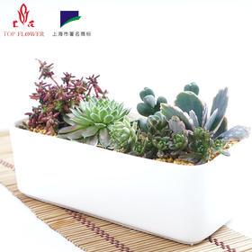 【上花】白瓷长方盆 多肉植物组合盆简约创意Zakka肉肉植物盆批发