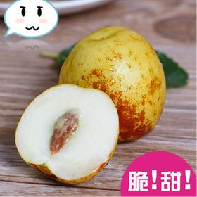 【新鲜上市】大荔冬枣 脆甜冬枣 3斤空运新鲜  大果 大泉州包邮