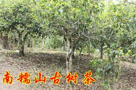 2019年南糯山古树春茶纯料私人高端定制620元/公斤