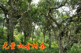 2019年无量山古树纯料私人高端定制620元/公斤