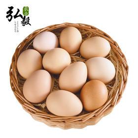 弘毅生态农场果园散养柴鸡土鸡新鲜鸡蛋三十枚