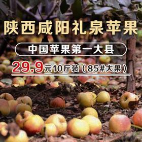 【爱心义卖】陕西咸阳/礼泉红富士苹果85#左右大果/10斤装/全国包邮