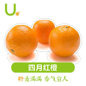 U店上新 四月红 橙子 5-10斤装水分足 口感甜