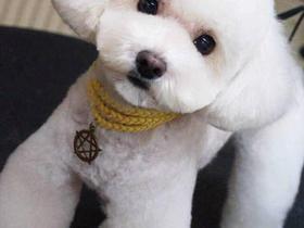 小型犬美容<5kg
