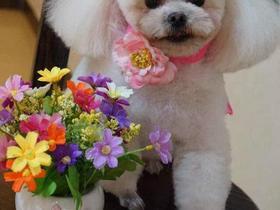 小型犬剃毛≤3kg