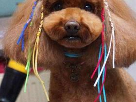 中小型犬洗澡5kg——10kg