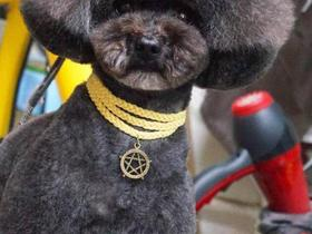 小型犬剃毛一次