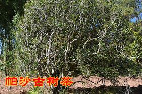 2019年帕沙古树纯料私人高端定制820元/公斤