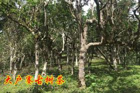 2019年大户赛古树纯料私人高端定制880元/公斤