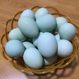 【南海网微商城】乌骨鸡蛋 鲜嫩爽滑 口感极佳 30枚装