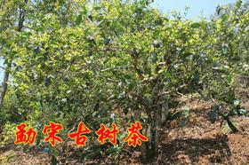 2019年勐宋古树纯料私人高端定制480元/公斤
