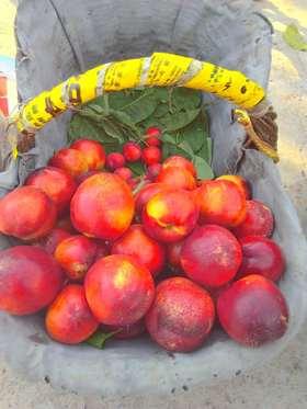 《热心姊妹花》爱心助农——西营镇罗伽优质果品