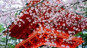 【假期出行】5天4夜大阪,京都,奈良自由行,关西一次玩个够,上海直飞大阪