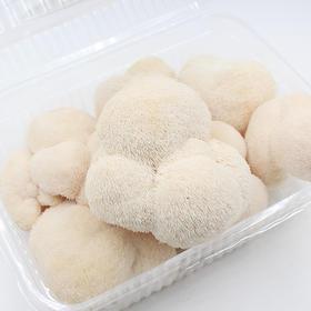 【新鲜猴头菇】纯天然现摘养胃圣品 红尖山产地包邮直发 滋补首选