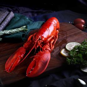 波士顿龙虾,产自寒冷海域,肉较嫩滑细致,高蛋白低脂肪,微量元素丰富,味道鲜美