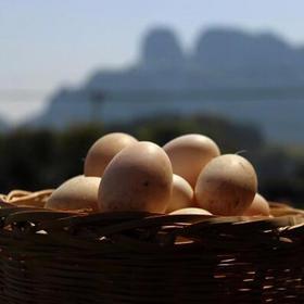 唯一药用鸭连城白鸭鸭蛋20个装 农场放养滋补佳品无饲料