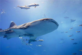 冲绳美丽海水族馆门票