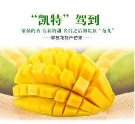 【果然多】四川攀枝花凯特芒果5斤/ 8斤产地直发包邮 果大肉多 核薄多汁