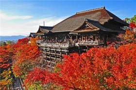 京都包车游(市场最低价)