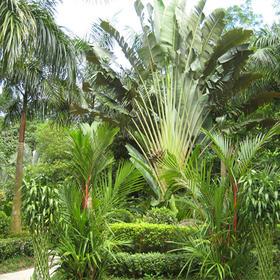 【一大一小】带孩子感受湖南首家热带雨林的神奇魅力,采摘热带水果,寻宝DIY绿植!
