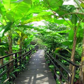 【二大一小】带孩子感受湖南首家热带雨林的神奇魅力,采摘热带水果,全家动手野炊!