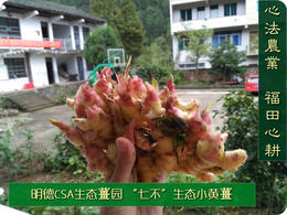 '七不'生态小黄姜1斤 生姜鲜姜小土姜 明安心法农业福田心耕(不包邮)