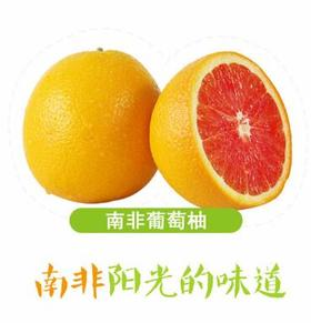 果子狸 南非葡萄柚(西柚)6颗