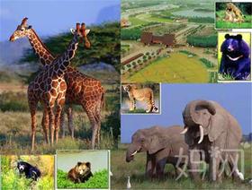 【妈网】5月28 上海野生动物园亲子一日游,一起去感受真实的动物世界
